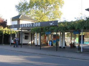 London Zoo in Londen